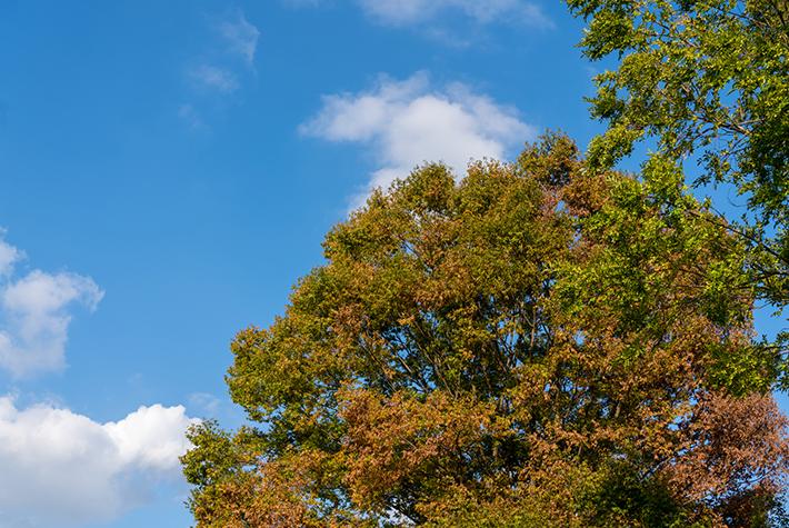葉が色づき始めたの写真