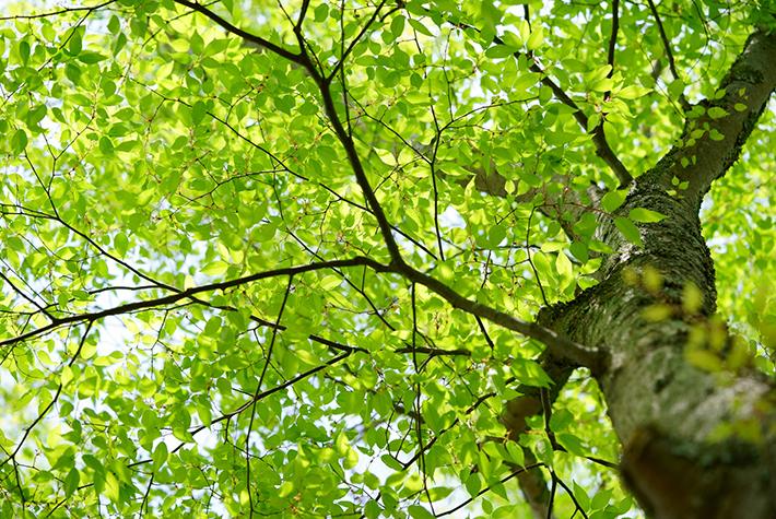 下から見た樹木の写真